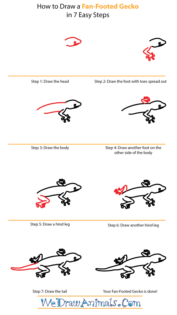 How to Draw a Fan-Footed Gecko - Step-by-Step Tutorial