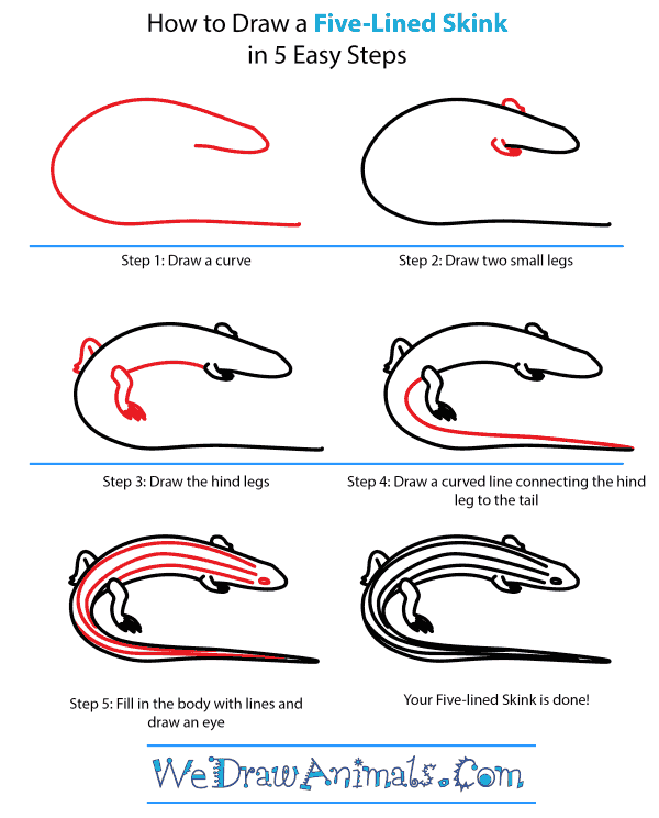 How to Draw a Five-Lined Skink - Step-by-Step Tutorial