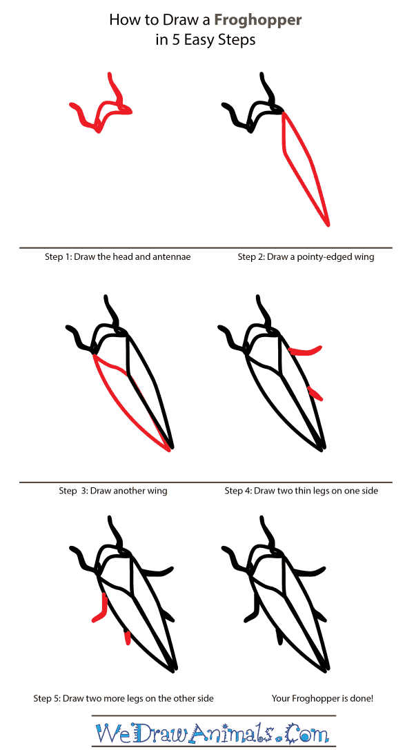 How to Draw a Froghopper - Step-by-Step Tutorial