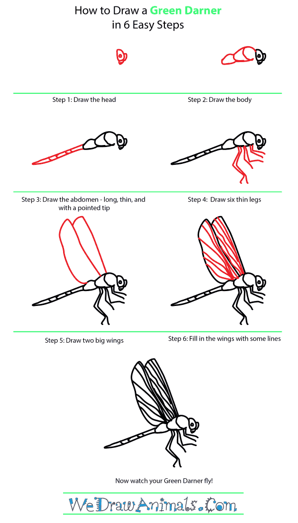 How to Draw a Green Darner - Step-by-Step Tutorial