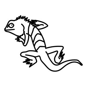 how to draw australian animals step by step