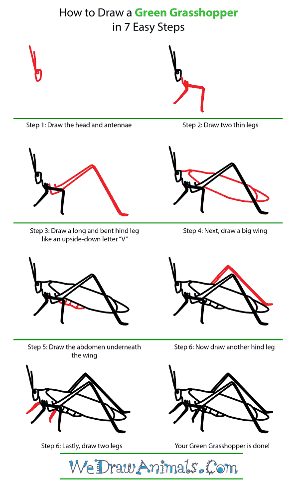 How to draw a green grasshopper step by step tutorial