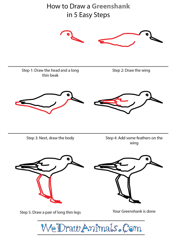 How to Draw a Greenshank - Step-by-Step Tutorial