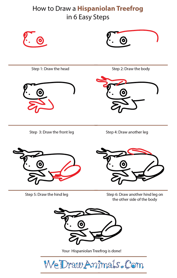 How to Draw a Hispaniolan Treefrog - Step-by-Step Tutorial