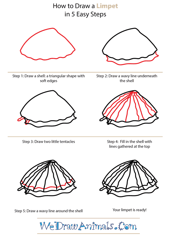 How to Draw a Limpet - Step-by-Step Tutorial