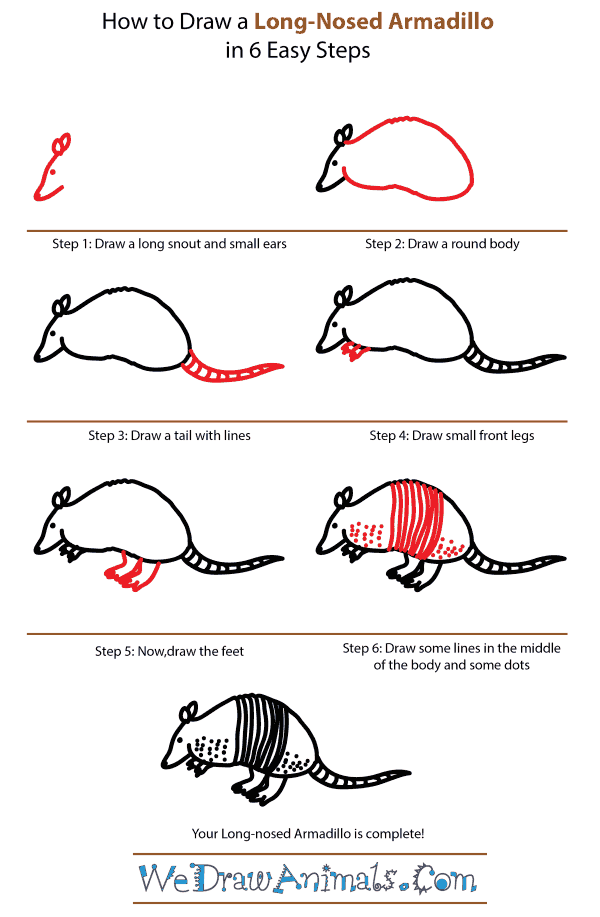 How to Draw a Long-Nosed Armadillo - Step-by-Step Tutorial