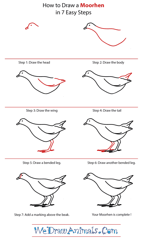 How to Draw a Moorhen - Step-by-Step Tutorial