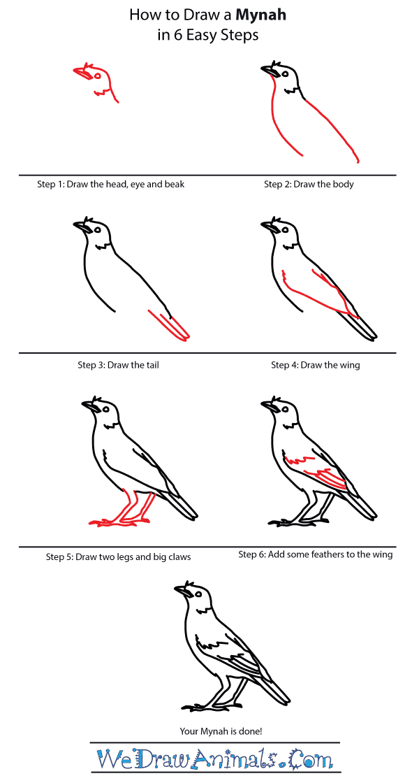 How to Draw a Mynah - Step-by-Step Tutorial
