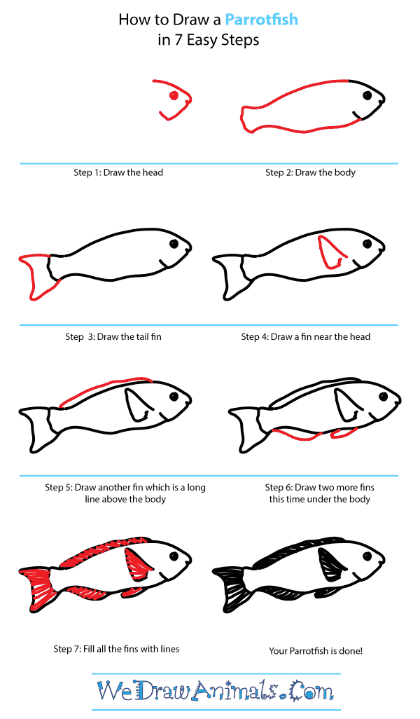 How to Draw a Parrotfish - Step-by-Step Tutorial
