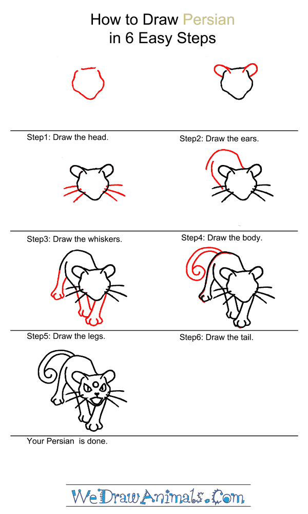 How to Draw Persian - Step-by-Step Tutorial