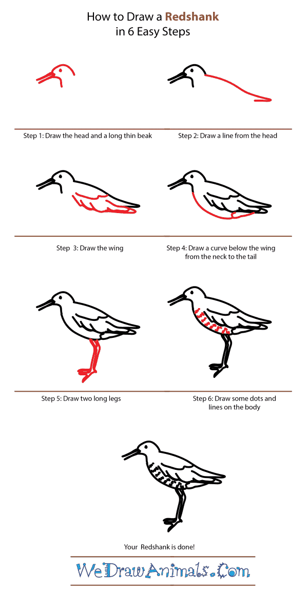 How to Draw a Redshank - Step-by-Step Tutorial