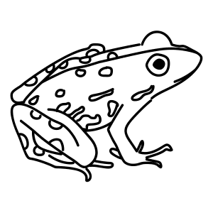 how to draw a river frog