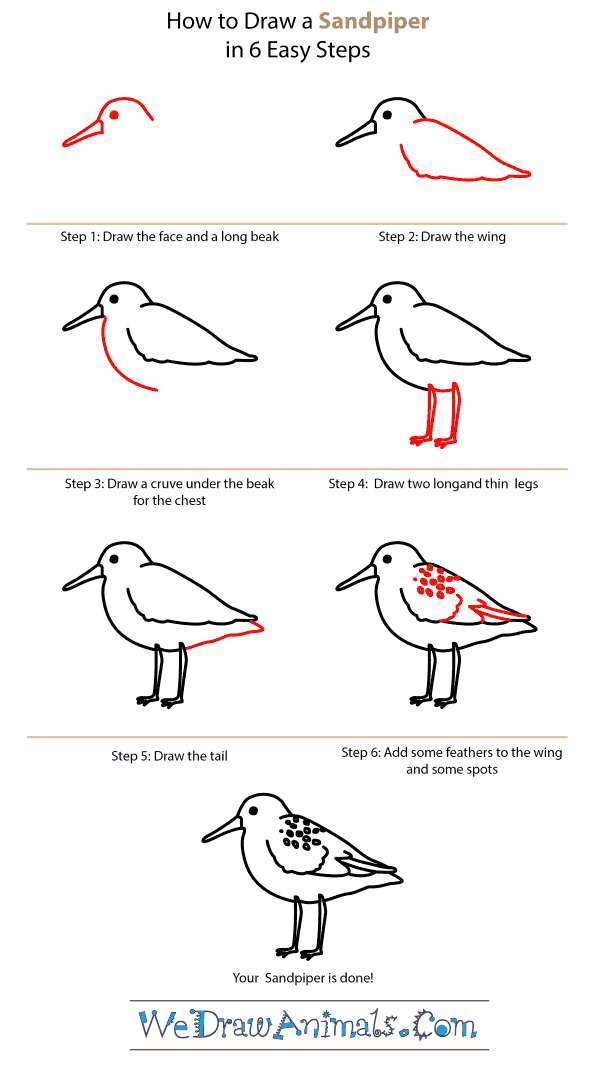 How to Draw a Sandpiper - Step-by-Step Tutorial