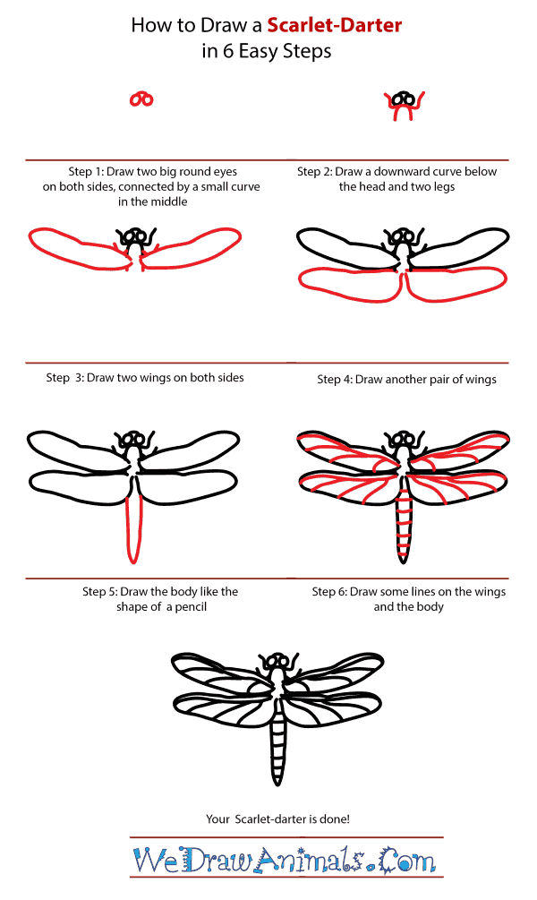 How to Draw a Scarlet-Darter - Step-by-Step Tutorial