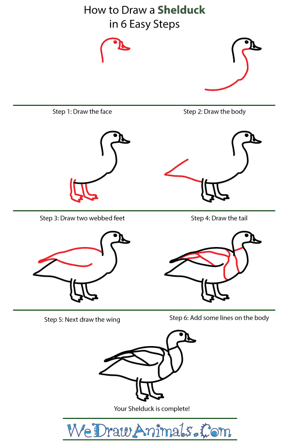 How to Draw a Shelduck - Step-by-Step Tutorial