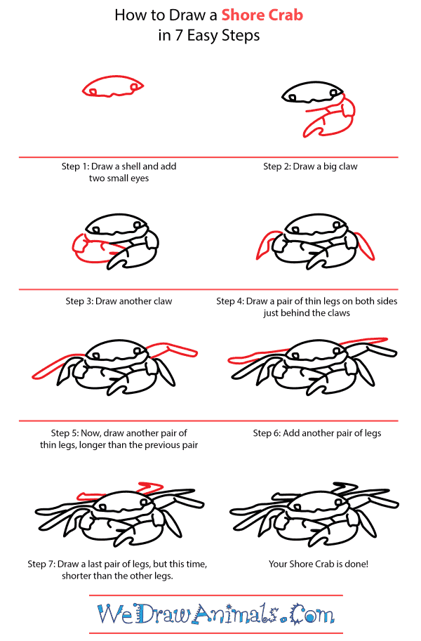 How to Draw a Shore Crab - Step-by-Step Tutorial