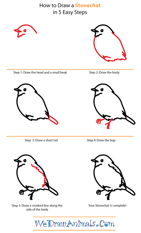 How to Draw a Stonechat - Step-by-Step Tutorial