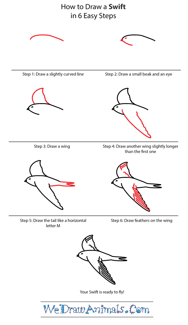 How to Draw a Swift - Step-by-Step Tutorial