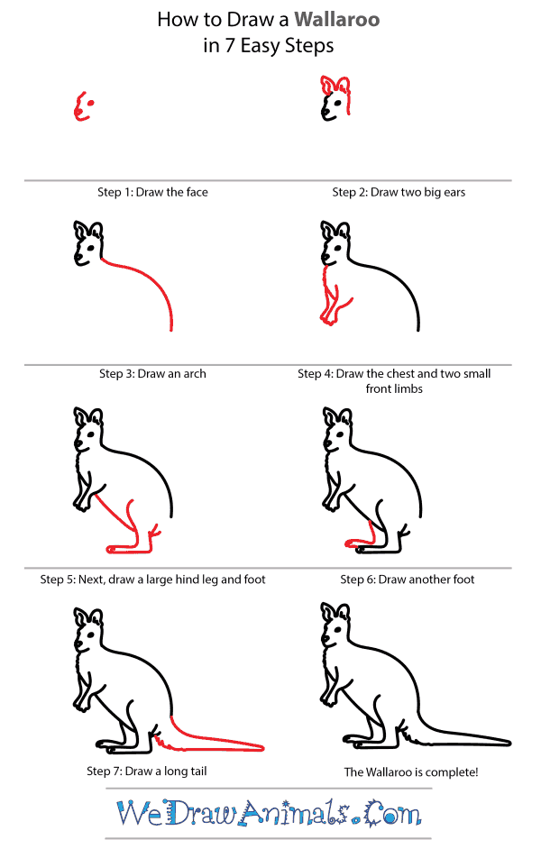 How to Draw a Wallaroo - Step-by-Step Tutorial