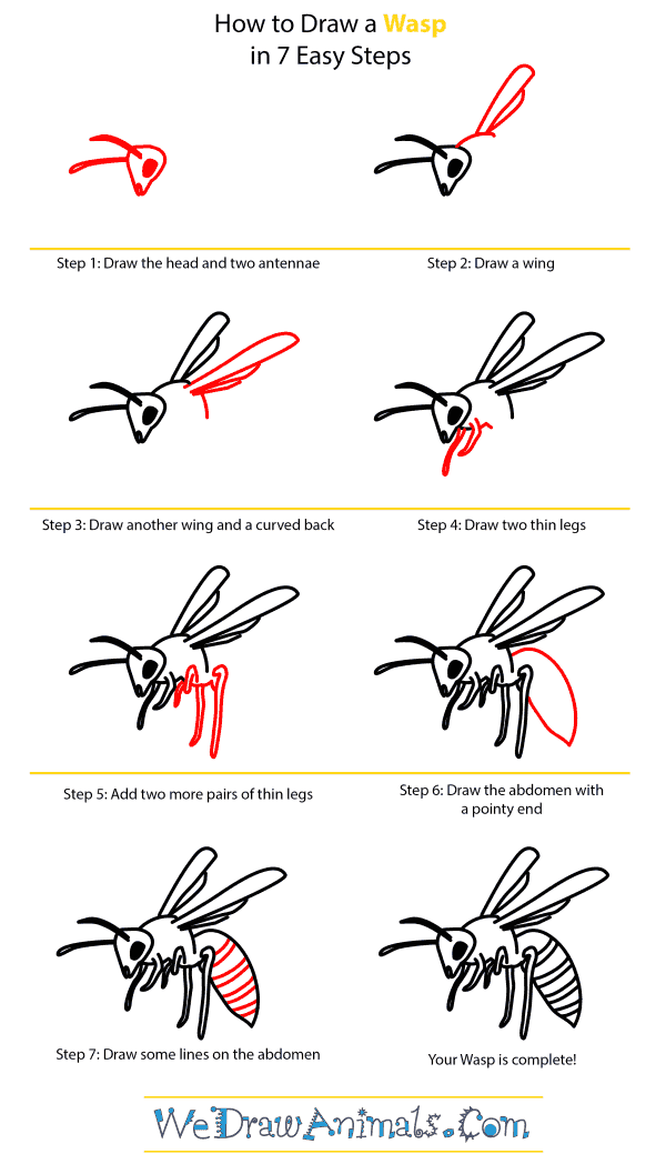 How to Draw a Wasp - Step-by-Step Tutorial