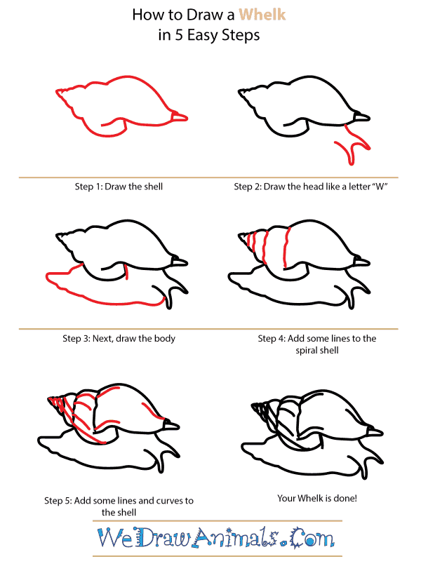 How to Draw a Whelk - Step-by-Step Tutorial