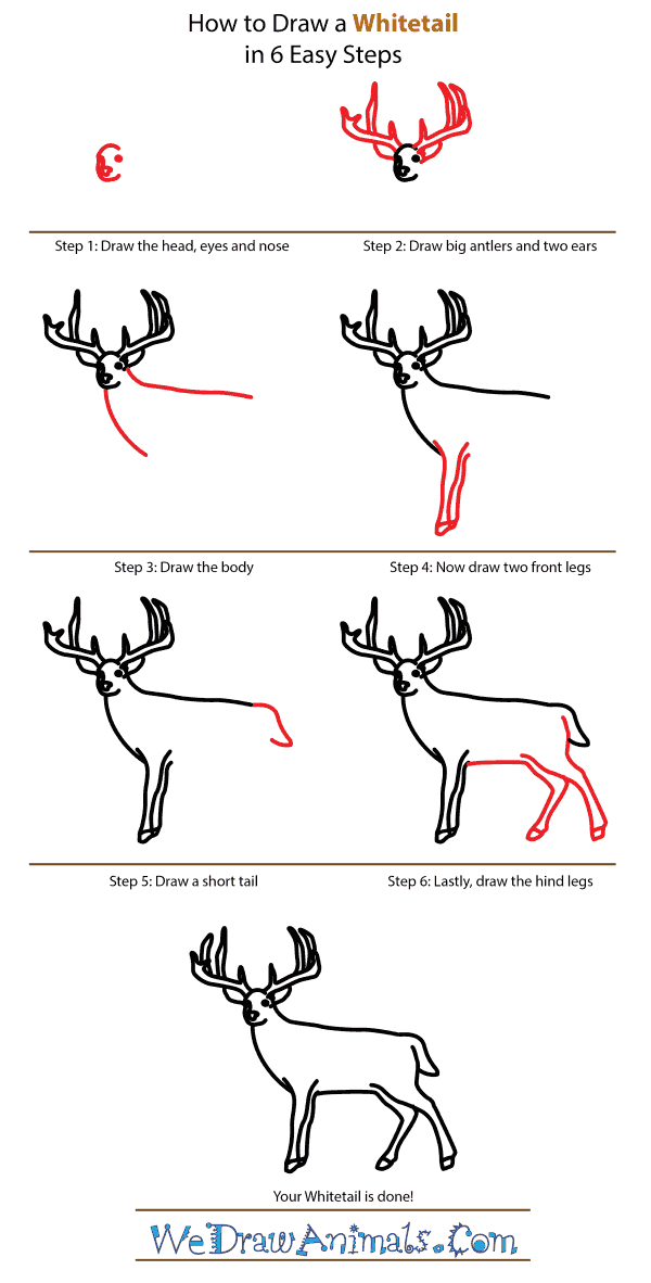 How to Draw a Whitetail - Step-by-Step Tutorial