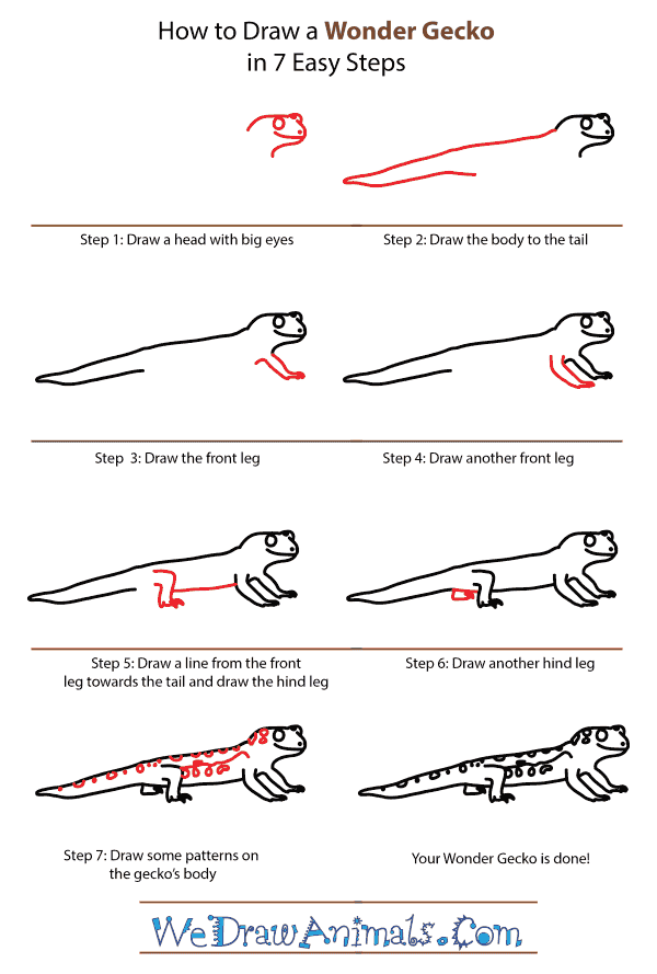 How to Draw a Wonder Gecko - Step-by-Step Tutorial
