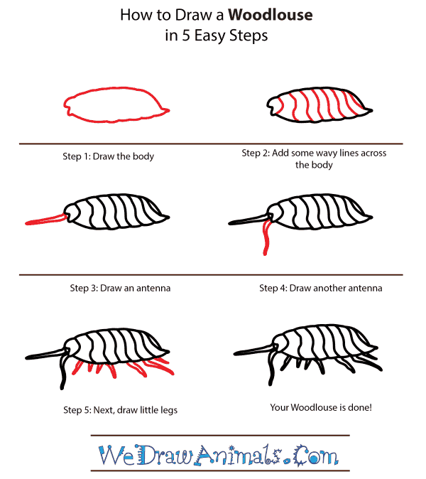 How to Draw a Woodlouse - Step-by-Step Tutorial