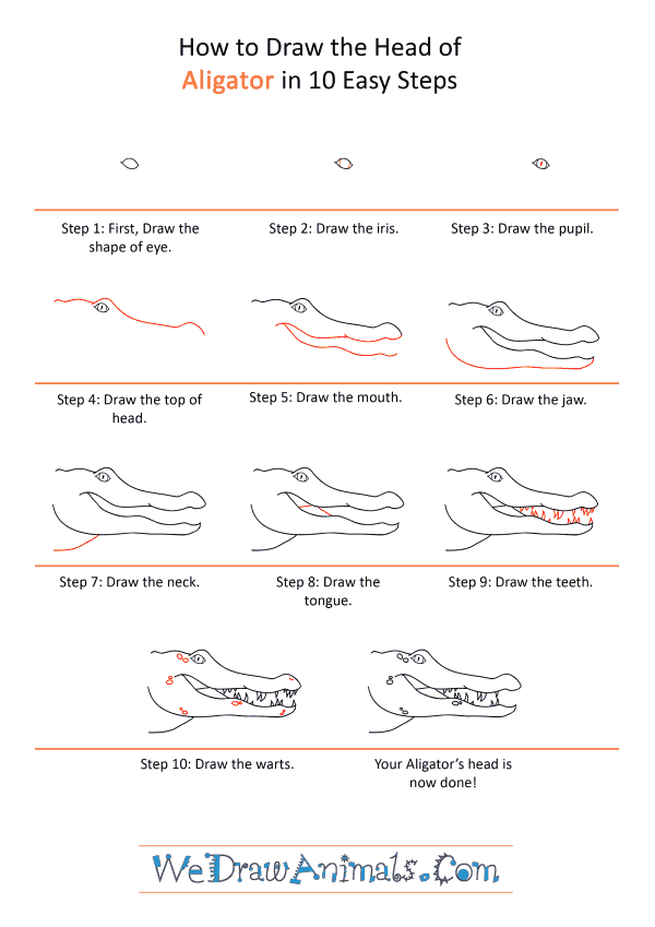 How to Draw an Alligator Face - Step-by-Step Tutorial