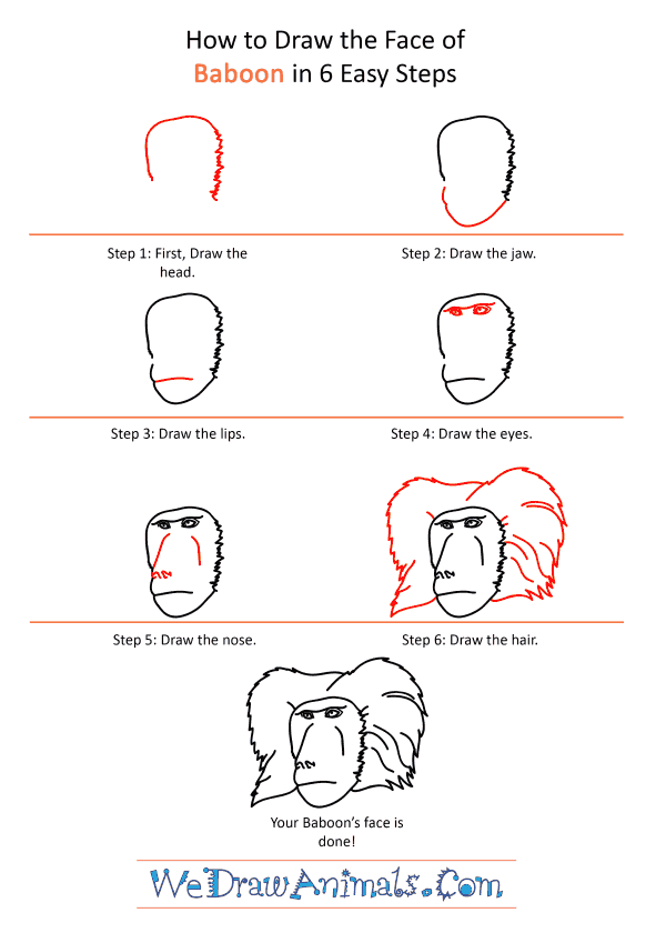 How to Draw a Baboon Face - Step-by-Step Tutorial