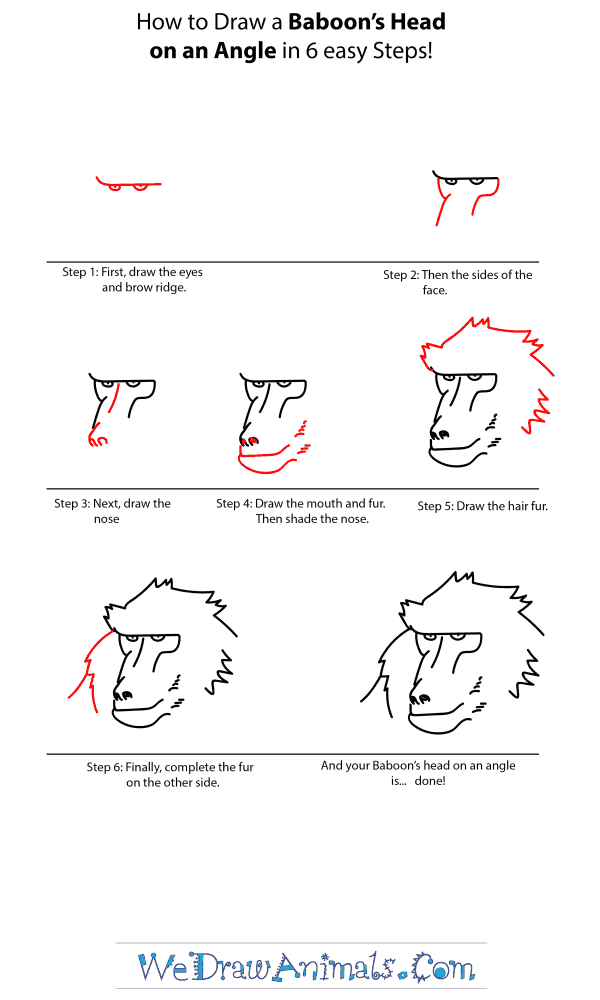 How to Draw a Baboon Head - Step-by-Step Tutorial
