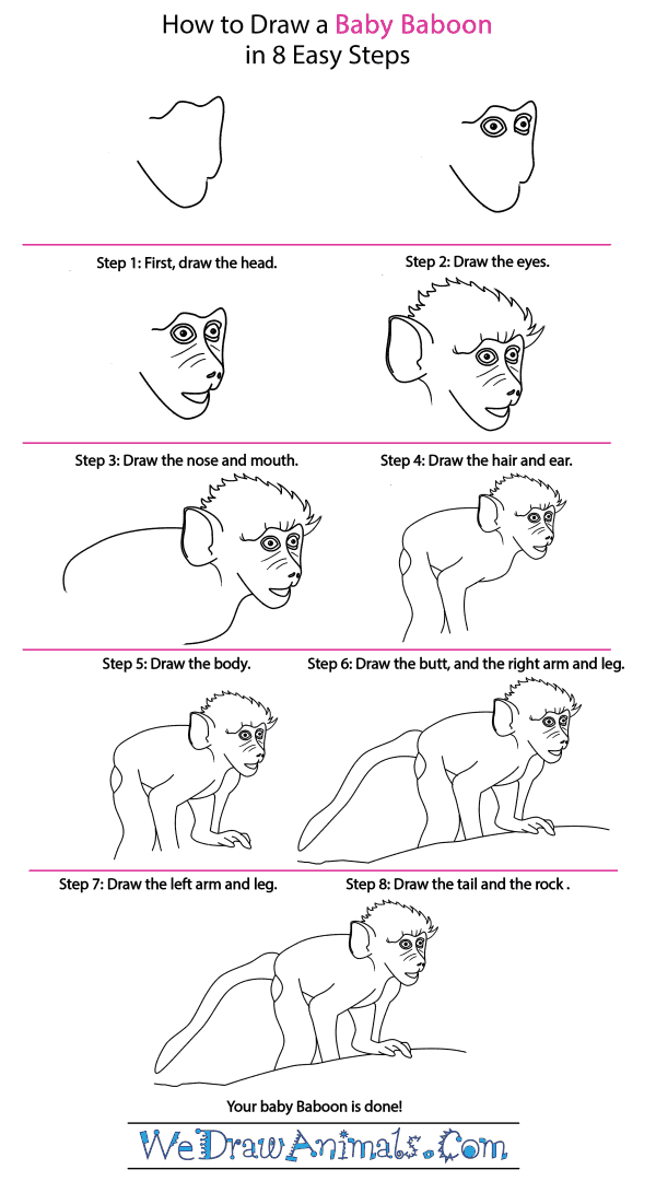 How to Draw a Baby Baboon - Step-by-Step Tutorial