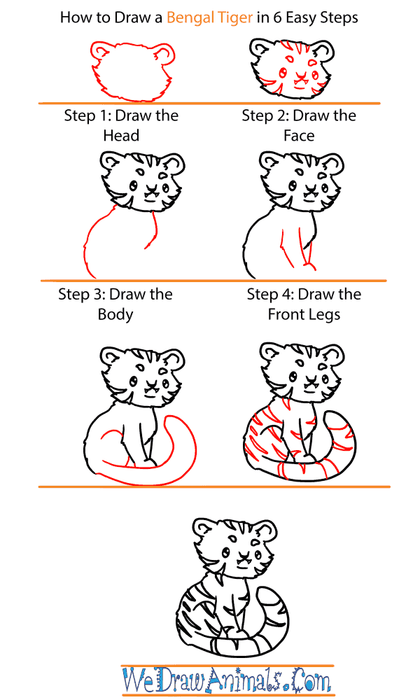 How to Draw a Baby Bengal Tiger - Step-by-Step Tutorial