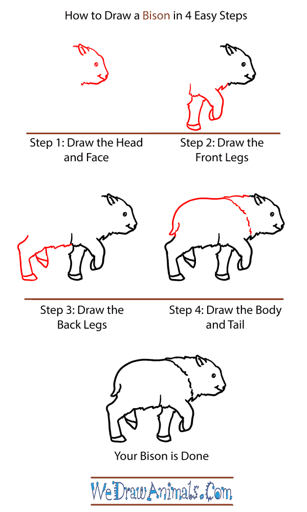 How to Draw a Baby Bison - Step-by-Step Tutorial