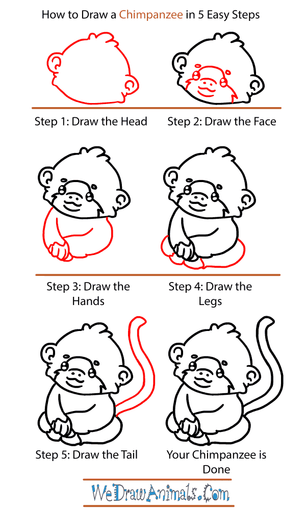 How to Draw a Baby Chimpanzee - Step-by-Step Tutorial
