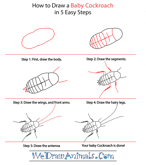 How to Draw a Baby Cockroach - Step-by-Step Tutorial