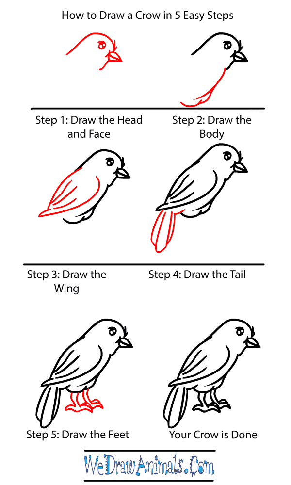 How to Draw a Baby Crow - Step-by-Step Tutorial