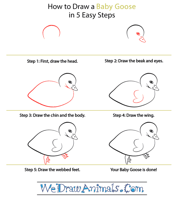 How to Draw a Baby Goose - Step-by-Step Tutorial