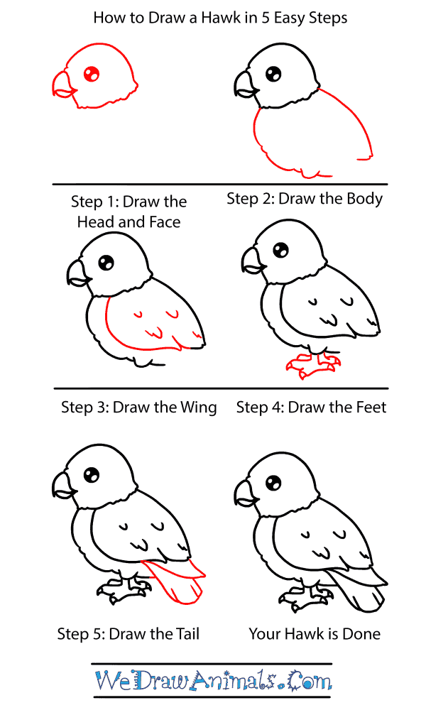 How to Draw a Baby Hawk - Step-by-Step Tutorial