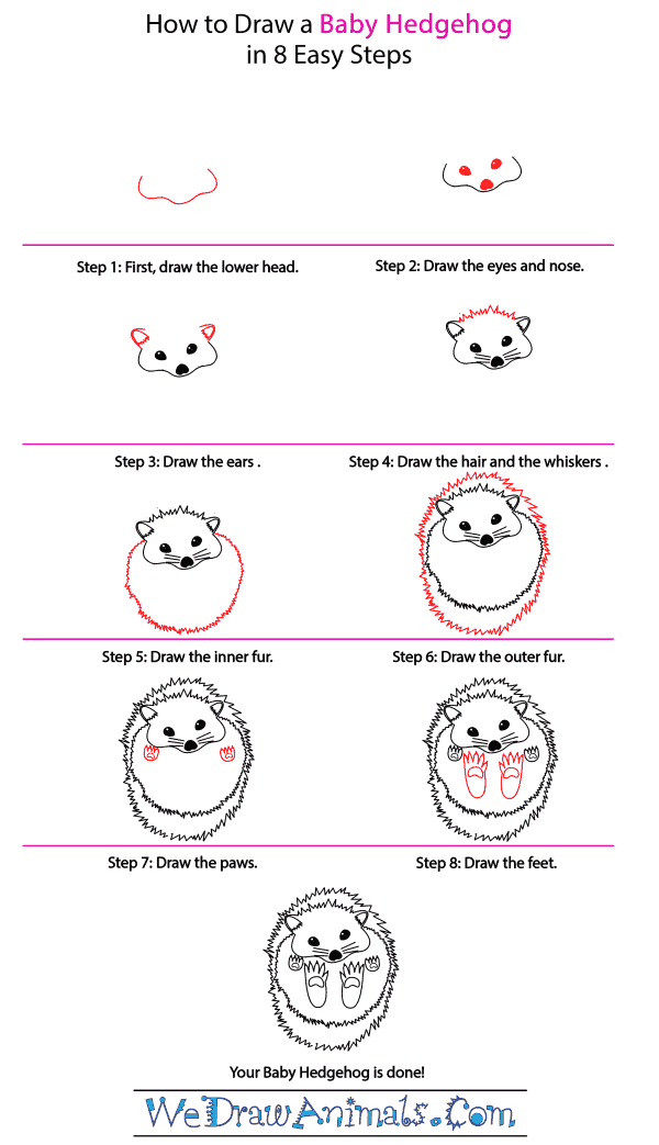 How to Draw a Baby Hedgehog - Step-by-Step Tutorial