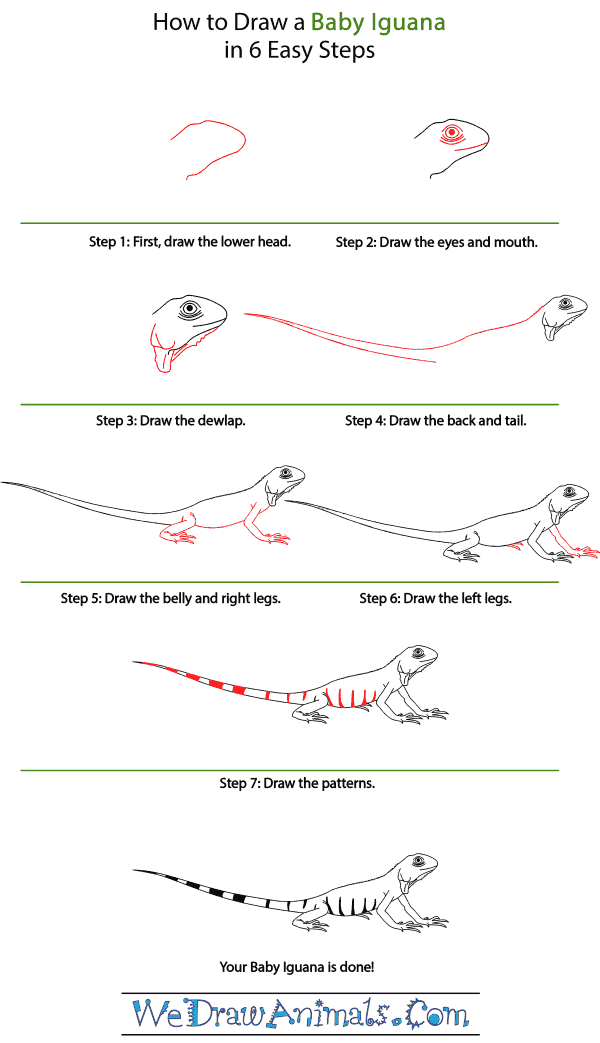 How to Draw a Baby Iguana - Step-by-Step Tutorial