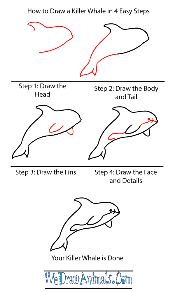 How to Draw a Baby Killer Whale - Step-by-Step Tutorial