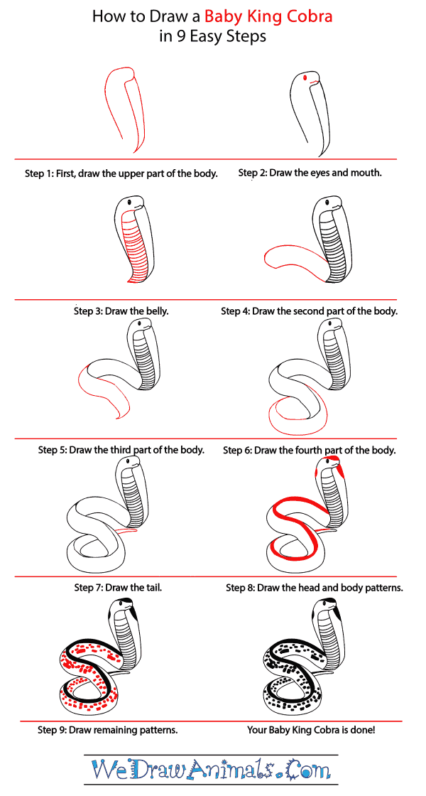 How to Draw a Baby King Cobra - Step-by-Step Tutorial