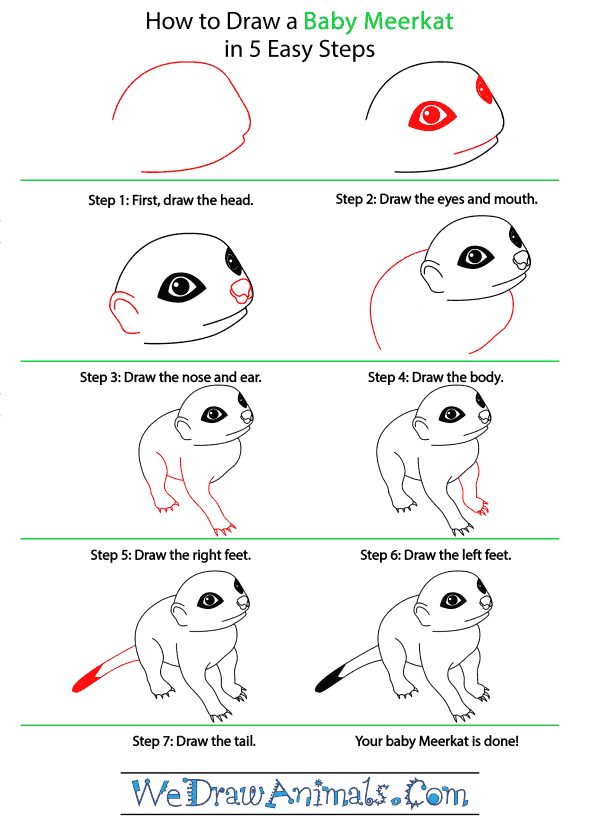 How to Draw a Baby Meerkat - Step-by-Step Tutorial