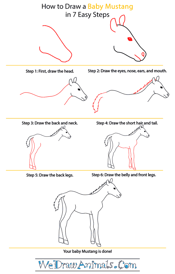 How to Draw a Baby Mustang Horse - Step-by-Step Tutorial