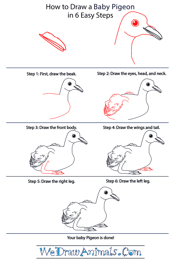 How to Draw a Baby Pigeon - Step-by-Step Tutorial