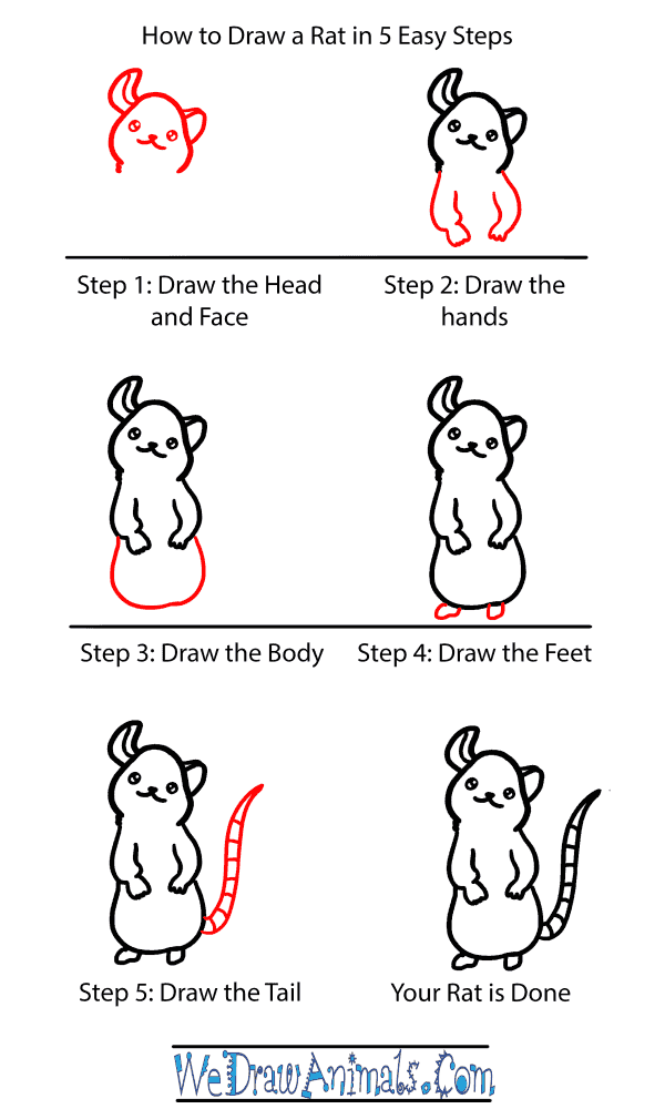 How to Draw a Baby Rat - Step-by-Step Tutorial