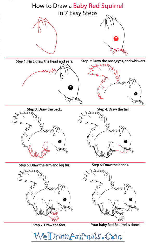 How to Draw a Baby Red Squirrel - Step-by-Step Tutorial