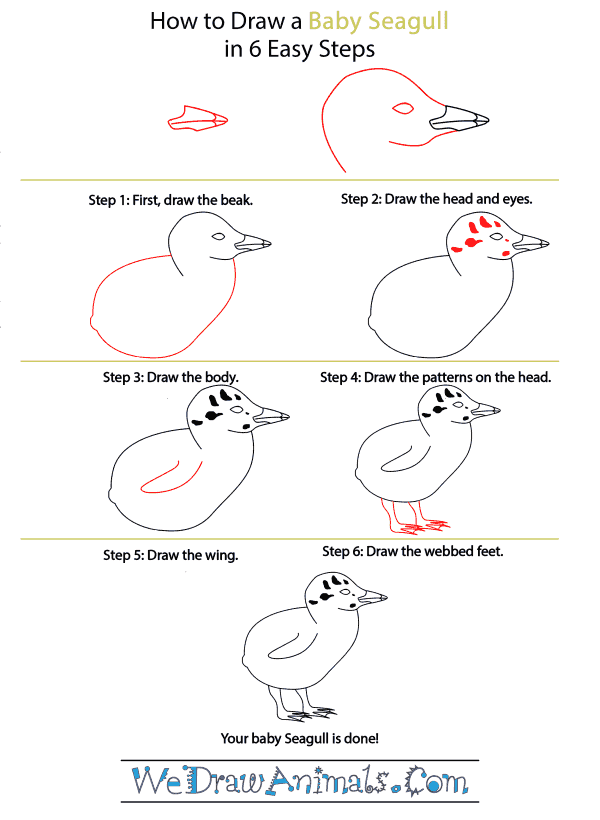 How to Draw a Baby Seagull - Step-by-Step Tutorial