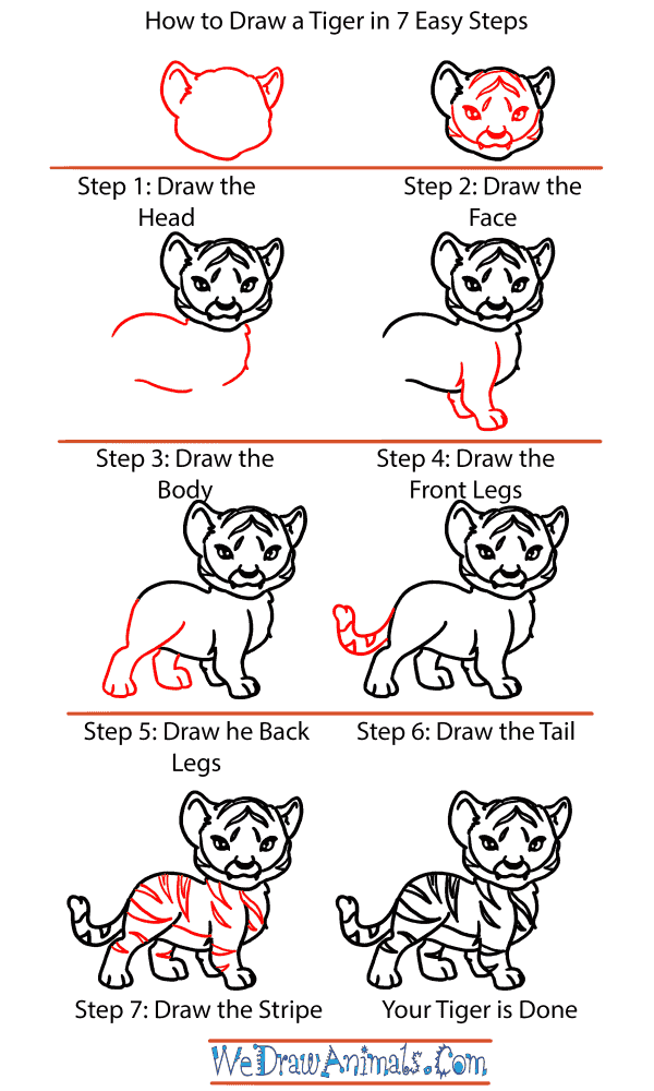 How to Draw a Baby Tiger - Step-by-Step Tutorial